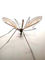 fliegen 2